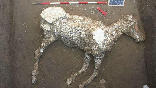 Depois que este cavalo morreu na erupção do Vesúvio, seu corpo ficou coberto de cinzas. Ao ...