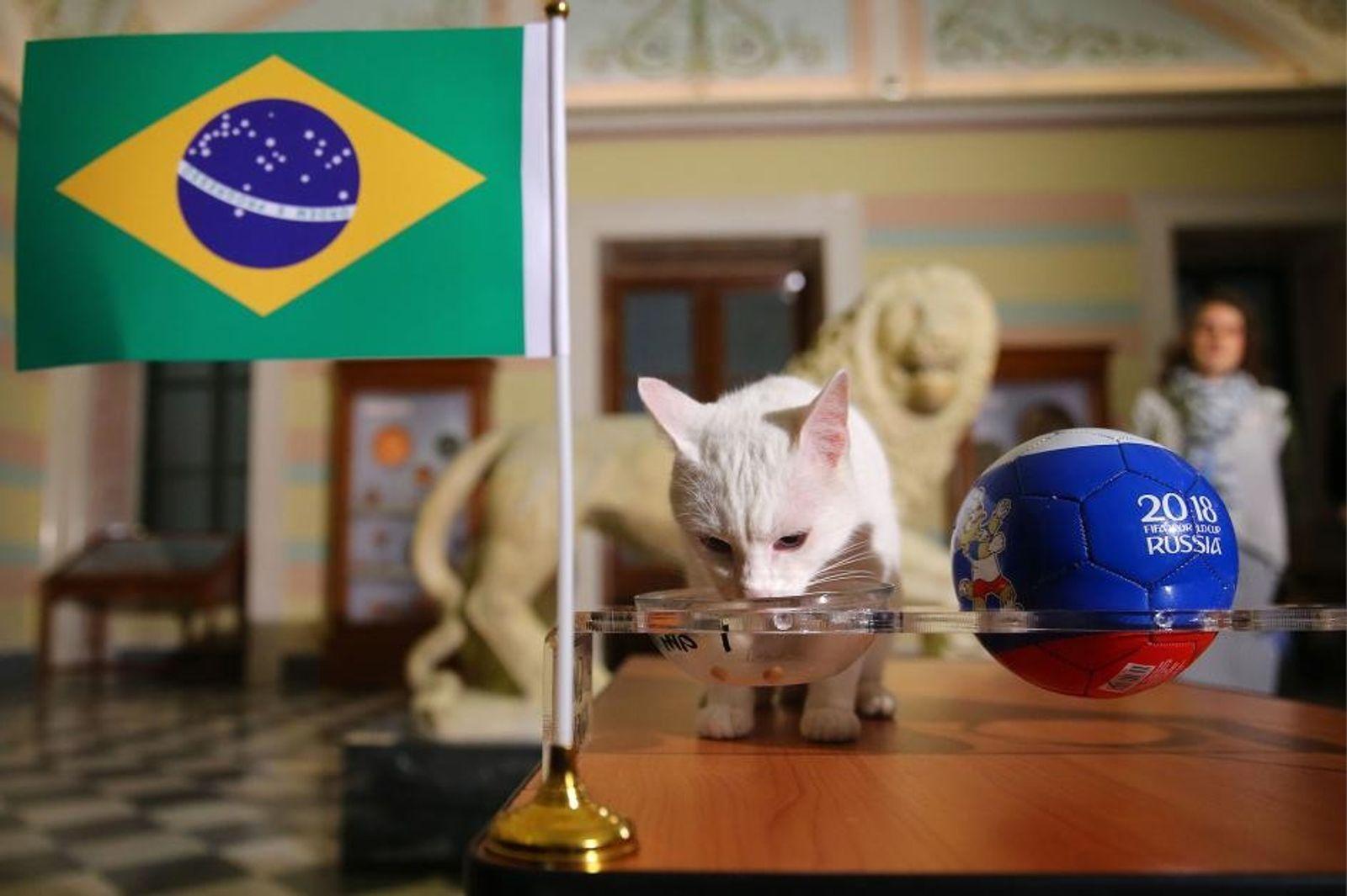 A ciência por trás dos animais videntes que preveem resultados da Copa do Mundo