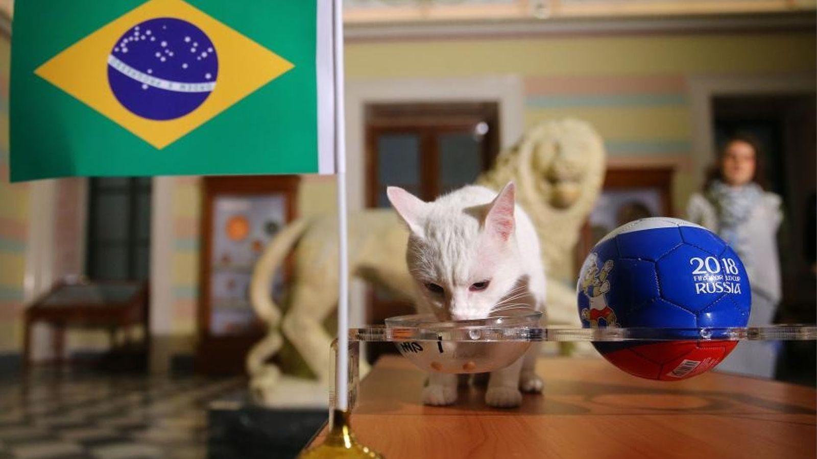 O gato Aquiles, oráculo animal da Copa do Mundo FIFA de 2018, prevê o resultado da ...