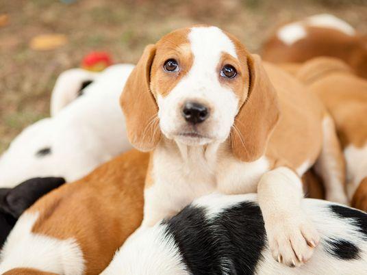 Você sabe qual é o auge da fofura canina?