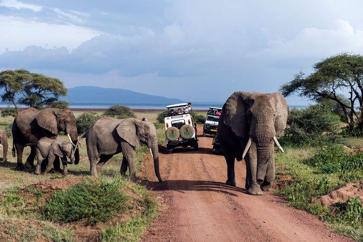 parque-safari-tanzania-elefantes