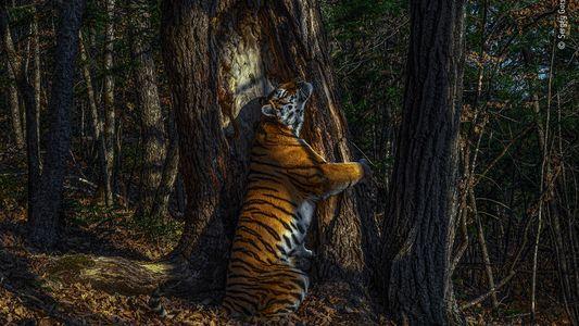 As melhores fotos da vida selvagem em 2020