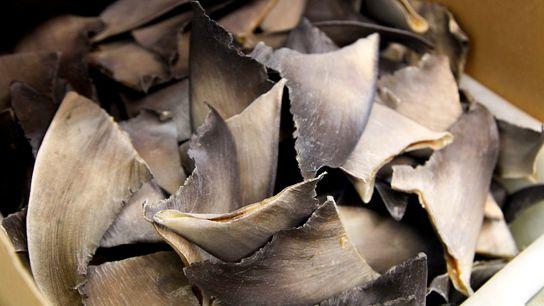 Os Estados Unidos não são grandes produtores ou consumidores de barbatanas de tubarão, mas sua localização ...