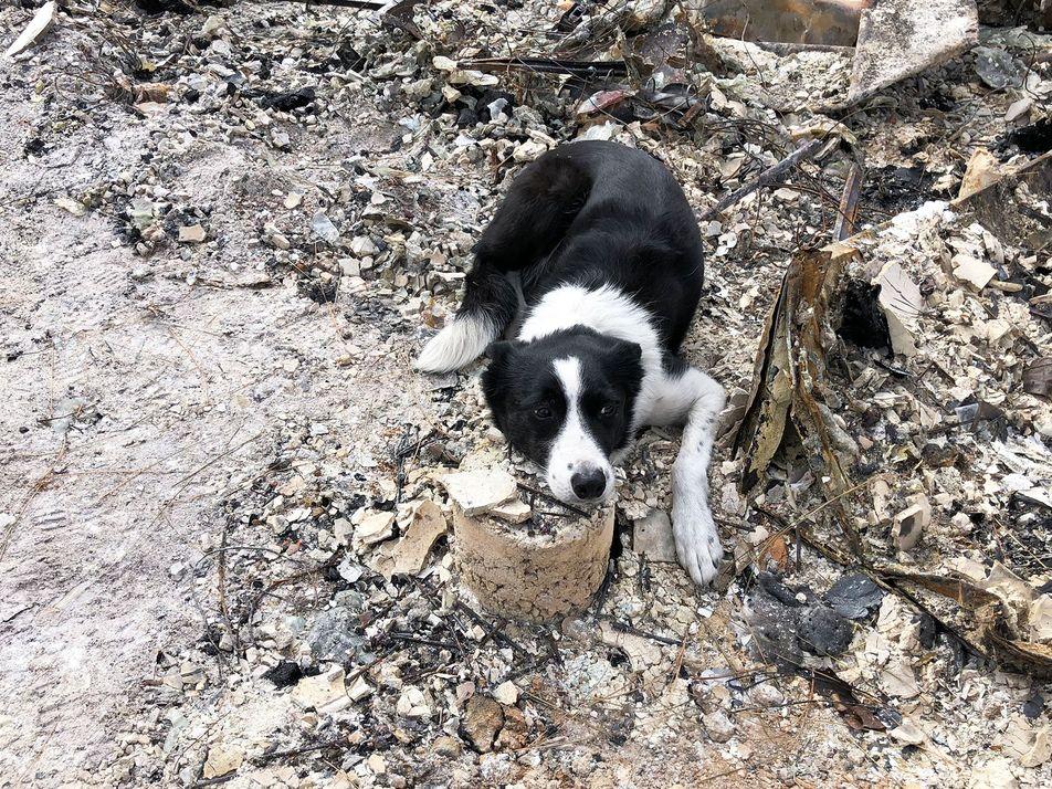 Cães farejadores estão sendo treinados para encontrar cinzas de corpos cremados