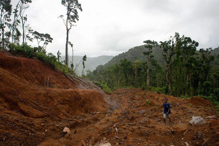 Uma estrada aberta para extração madeireira leva ao acampamento principal da Gallego, uma madeireira forçada pela ...