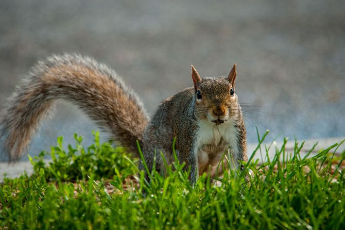 inteligencia-dos-esquilos