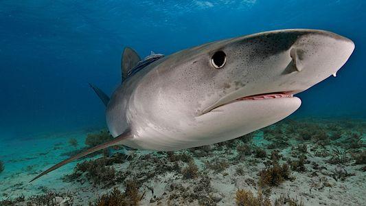 Uma em 893 quatrilhões de chances: homem é mordido por tubarão, urso e cobra