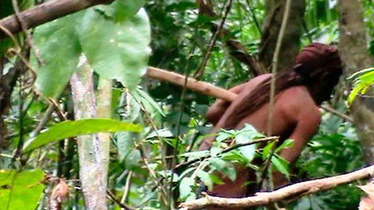 Uma rápida visão do sobrevivente solitário Na Terra indígena de Tanaru no estado de Rondônia.