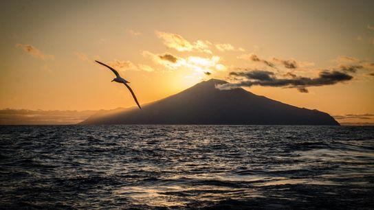 Ave marinha sobrevoa a Ilha de Tristão da Cunha. A região é um importante santuário de ...