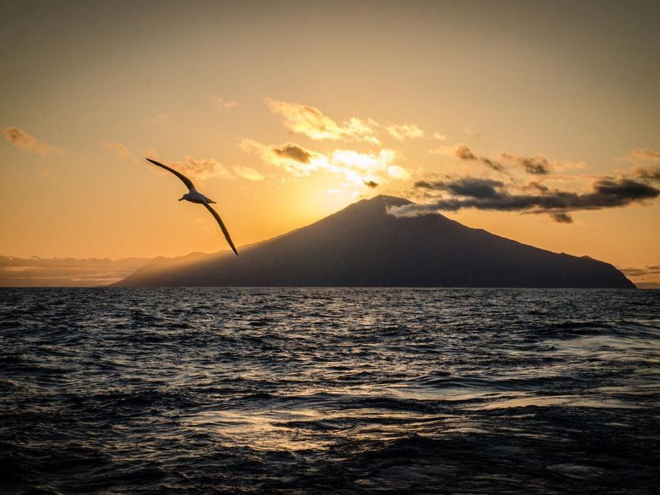 Novo santuário marinho no Atlântico será um dos maiores do mundo