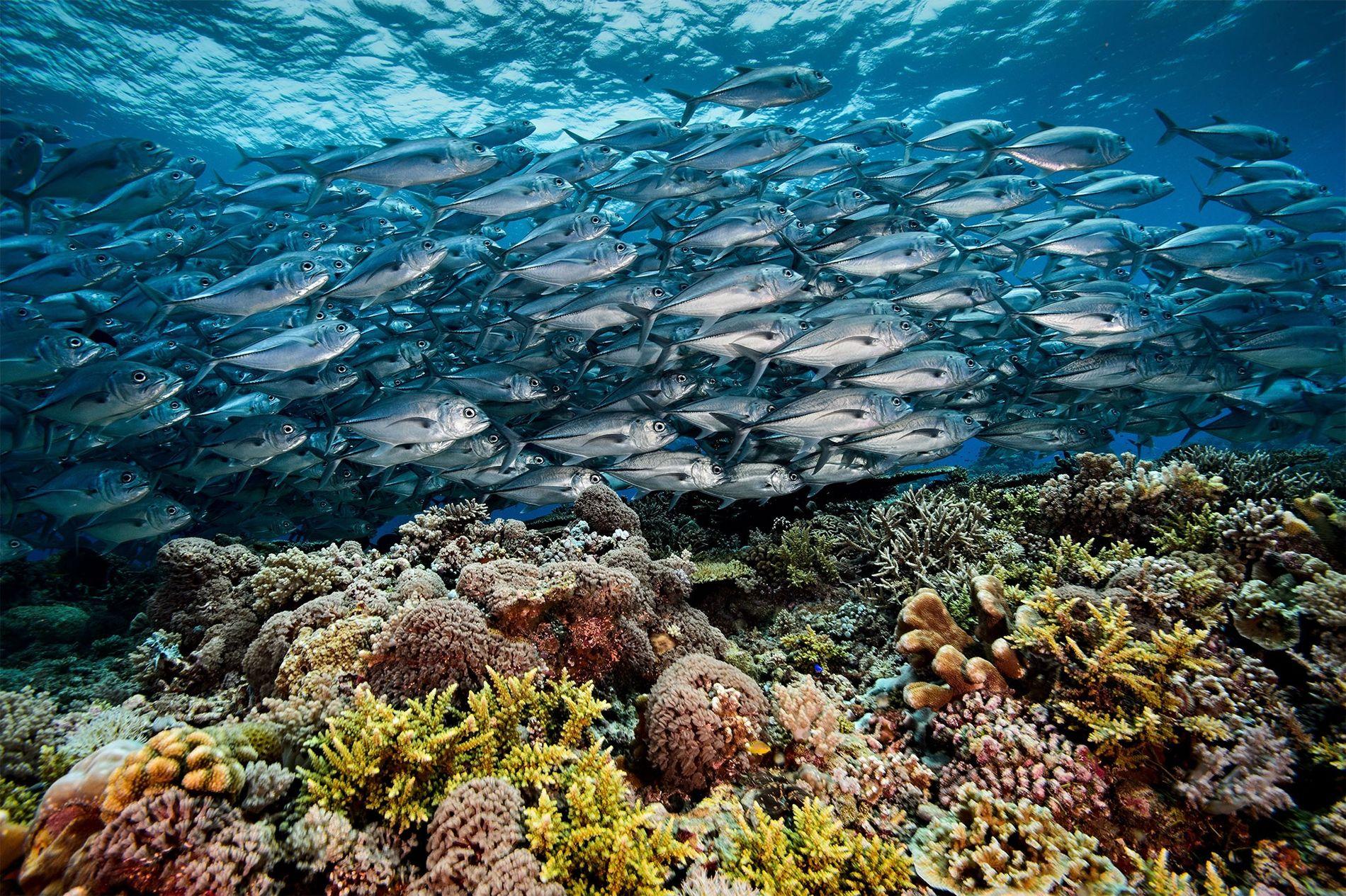 recife-tubbataha-filipinas