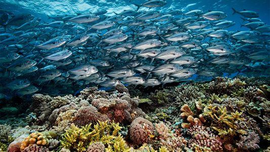 Como o coração dos corais das Filipinas continua batendo?