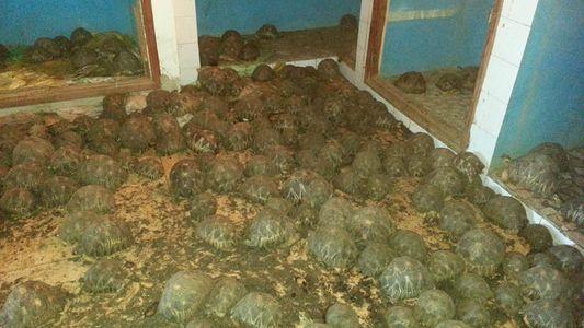 Mau cheiro faz polícia descobrir 10 mil tartarugas roubadas em Madagascar