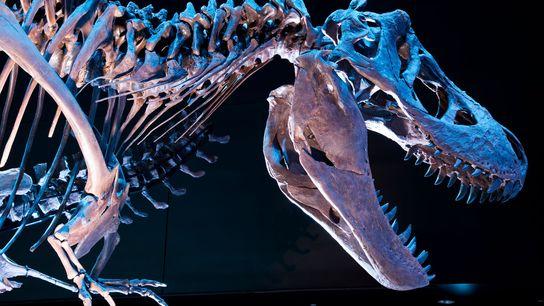 01-tiranossauro-rex