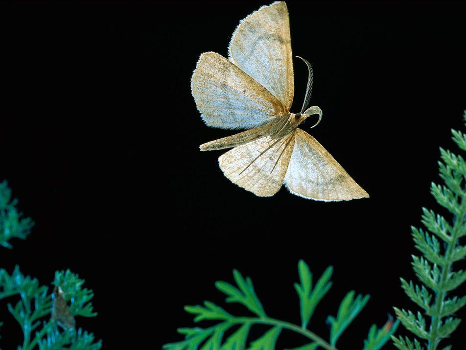 Alguns insetos sentem sabores pelos pés e ouvem com as asas