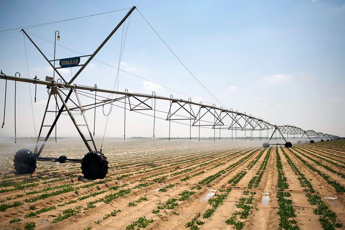 Escassez alimentar e hídrica deve gerar colapso da natureza nos próximos 30 anos