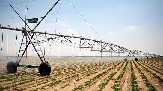 Um enorme pivô de irrigação automatizado se move lentamente sobre um batatal plantado em terras desertificadas ...