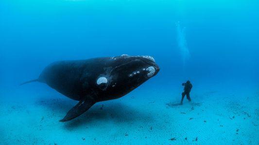 Fotos de baleias pelo mundo