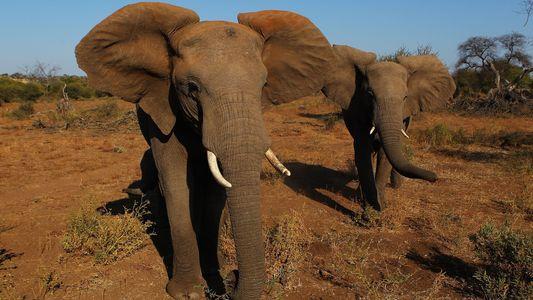 Entra em vigor lei que proíbe comércio de marfim na China