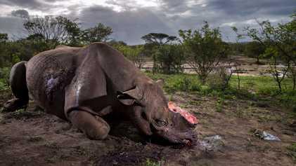 Veja as mais impactantes fotos de vida selvagem do ano