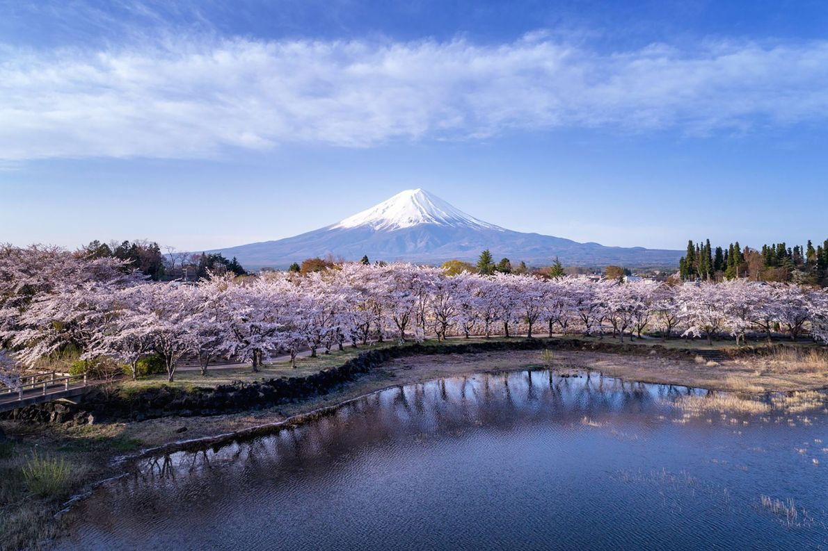 Capturando a efêmera beleza das flores, a foto aérea tirada por Dungo do Parque Inokashira mostra ...