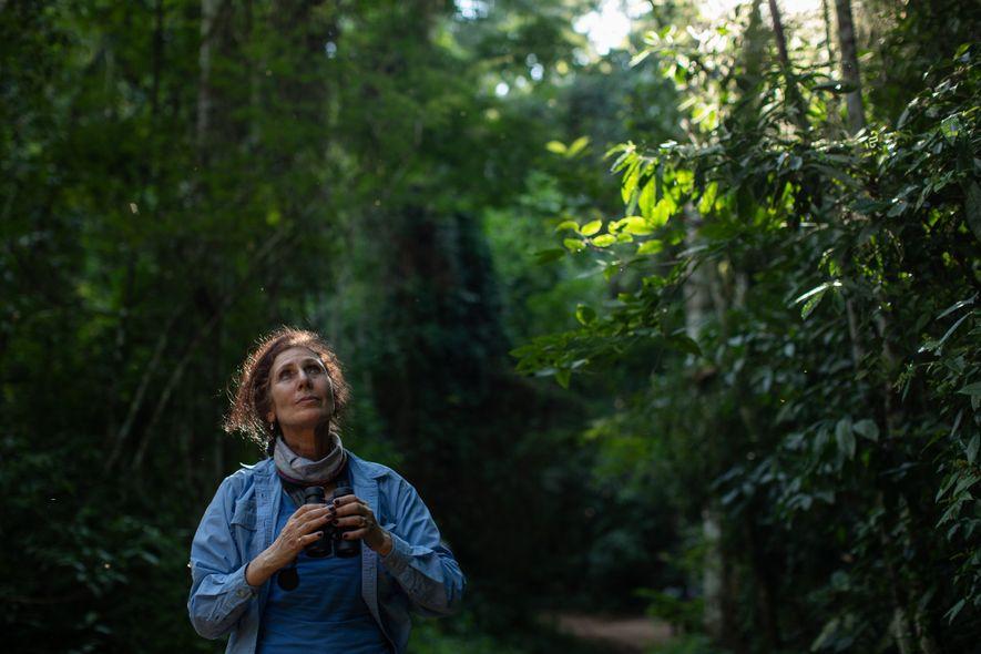 Desde 1984 a Dra. Karen Strier coordena o projeto Muriquis de Caratinga, no qual monitora e ...