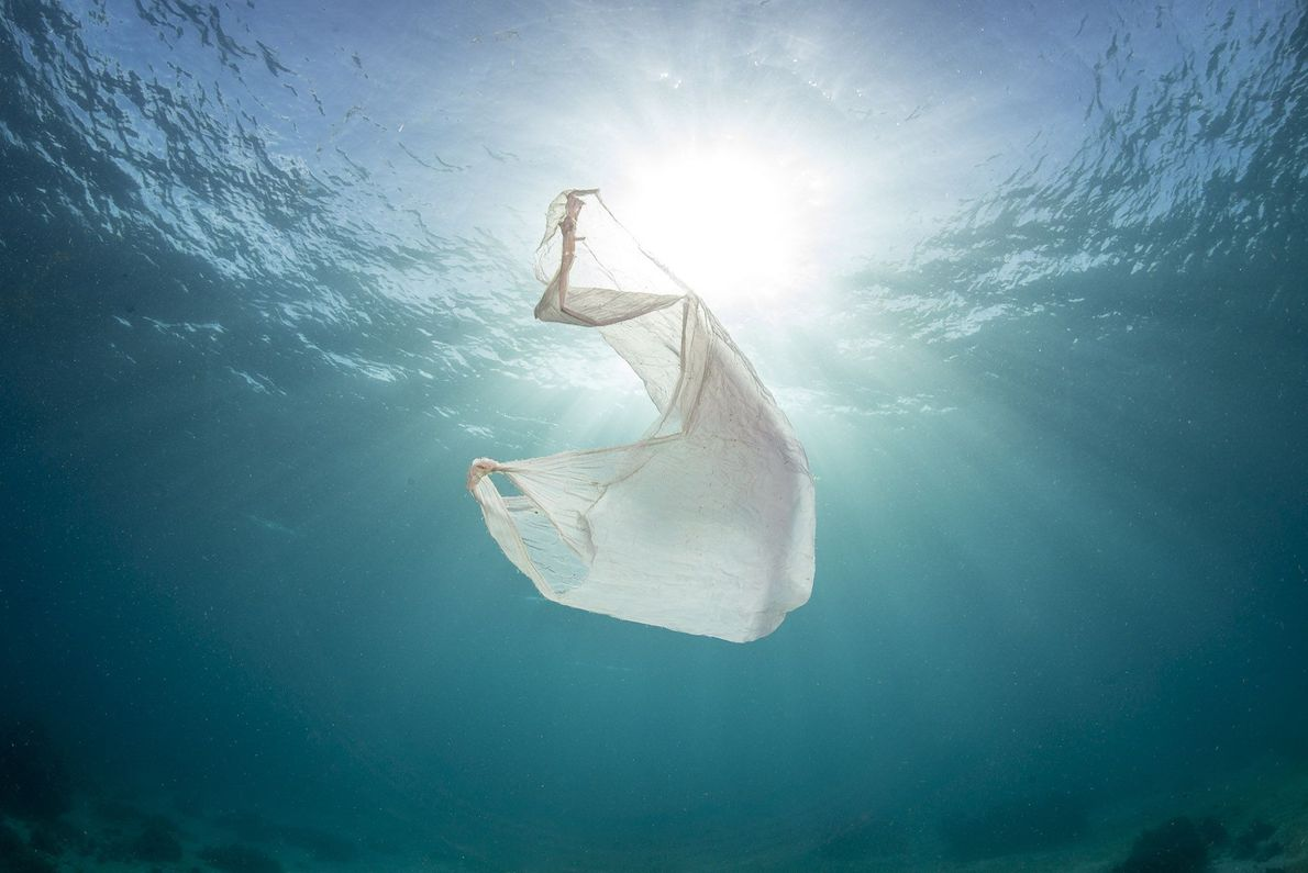 Mais de 5 trilhões de pedaços de plástico estão flutuando no oceano.