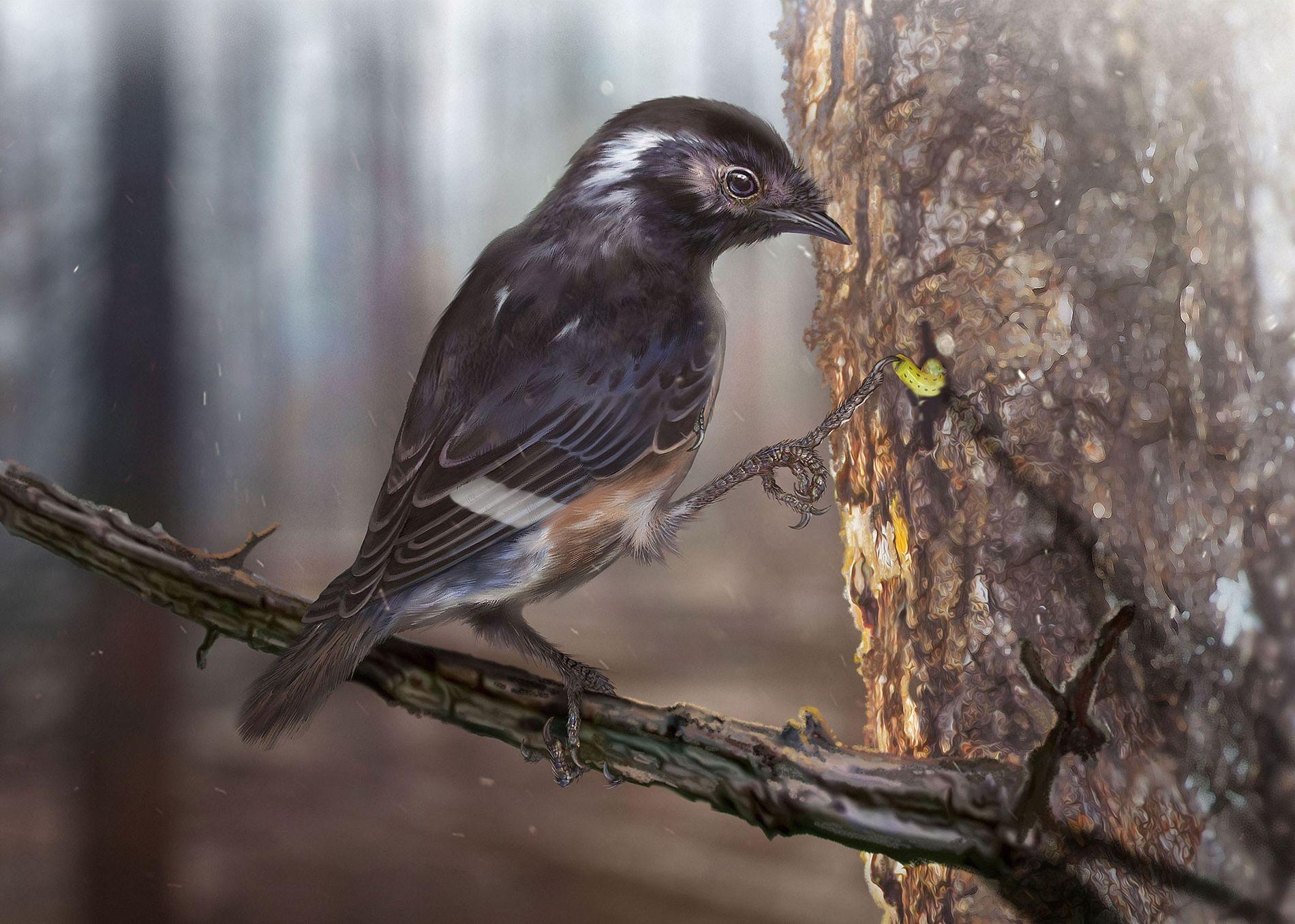 Uma nova espécie de enantiornithine, um grupo extinto de aves da era dos dinossauros, possui dedos ...