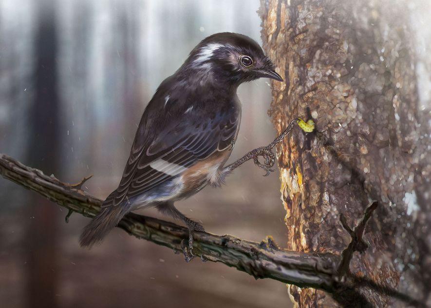 Pé de ave pré-histórica encontrado em âmbar possui dedos estranhamento longos