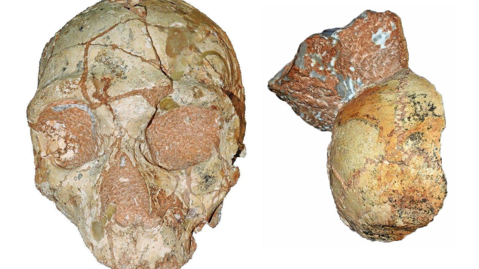 Esses fósseis fragmentados, encontrados a apenas alguns centímetros de distância um do outro, poderiam ser os ...