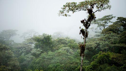 "Encontrados vestígios de sociedade perdida em floresta nublada ""intocada"""