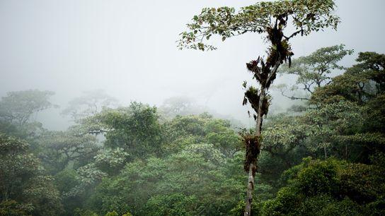 As cênicas florestas nubladas do Equador escondem evidências de comunidades agrícolas que um dia prosperaram na ...