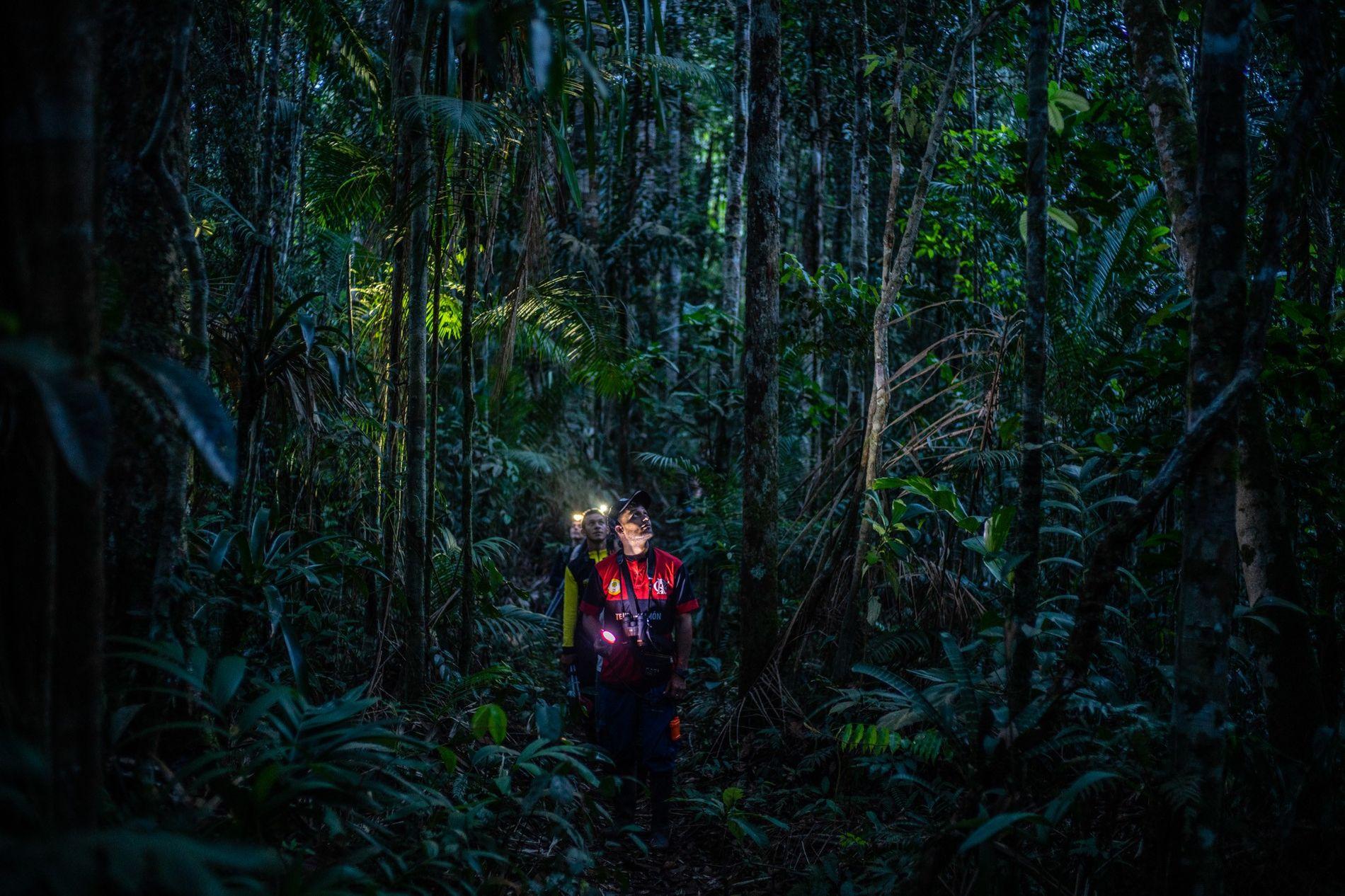 Uma equipe de cientistas procura por corujas em uma floresta remota da Colômbia, que só pôde ...