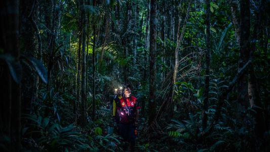 Após décadas nas mãos das Farc, floresta colombiana está aberta para exploração