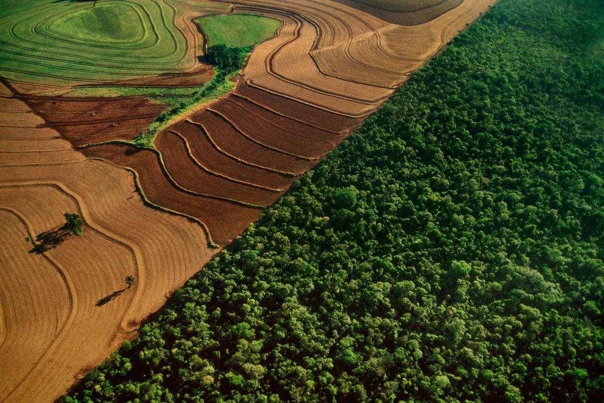 Áreas agrícolas fazem fronteira com a floresta tropical do Parque Nacional do Iguaçu, no Brasil, que …