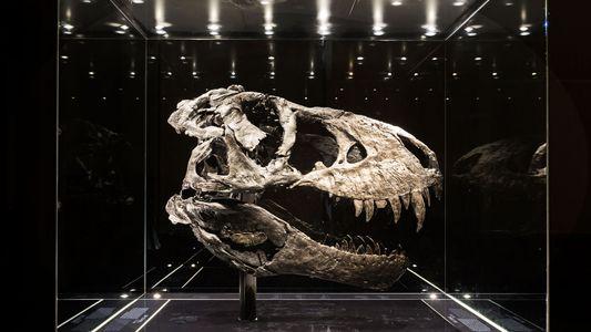 23 fotos de fósseis capturam o mistério e a beleza dos dinossauros