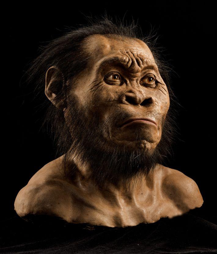 Embora primitivo em alguns aspectos, o rosto, o crânio e os dentes (vistos nesta reconstrução) mostram ...