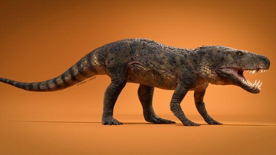 A espécie recém-descoberta de réptil pré-histórico, chamada Dynamosuchus collisensi, viveu 230 milhões de anos atrás durante ...