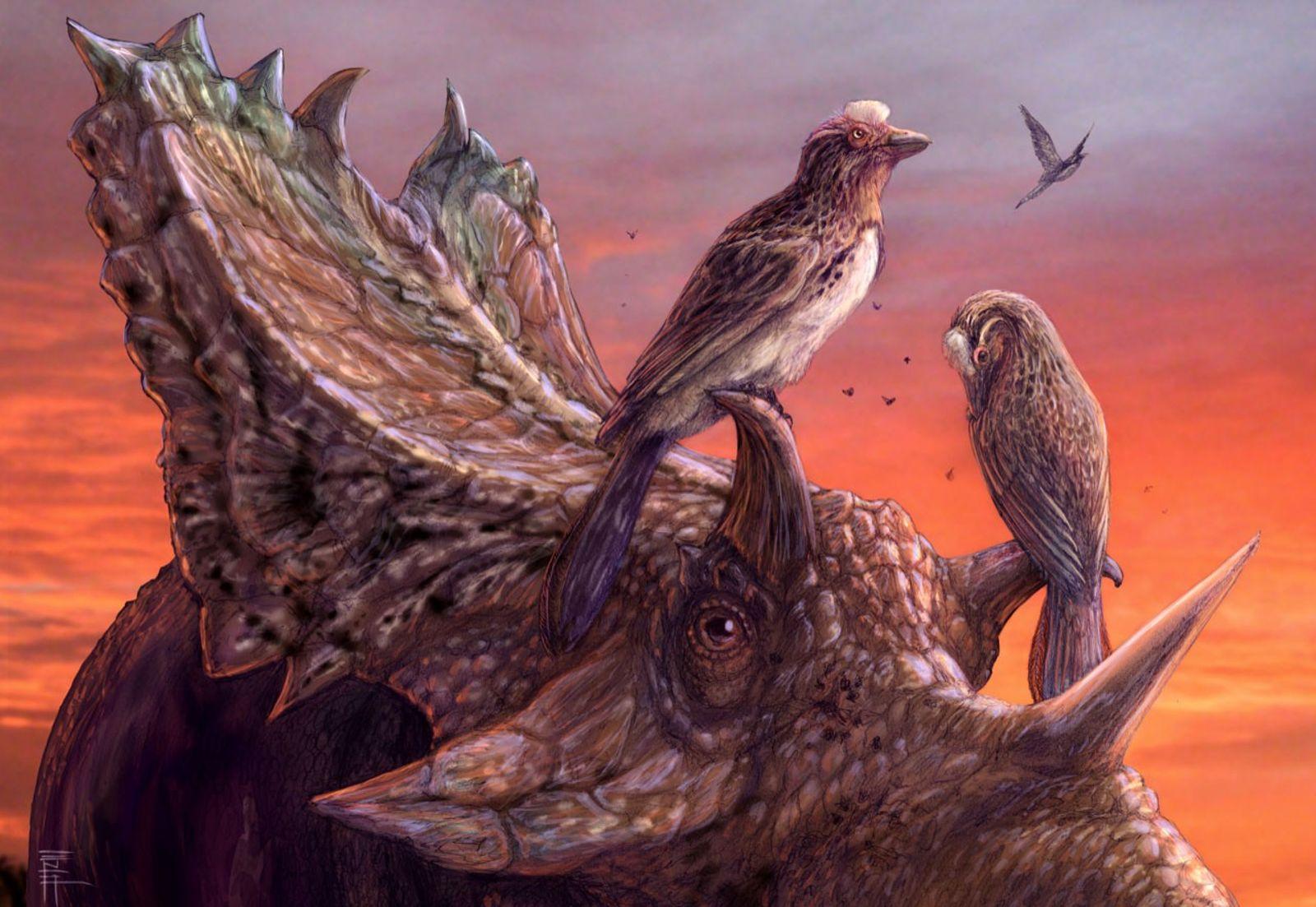 Um par de pássaros abutres Mirarce eatoni senta-se empoleirado no dinossauro Utahceratops gettyi ceratopsiano em uma ...