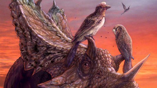 Fóssil incrivelmente completo de pássaro está entre os maiores da América do Norte