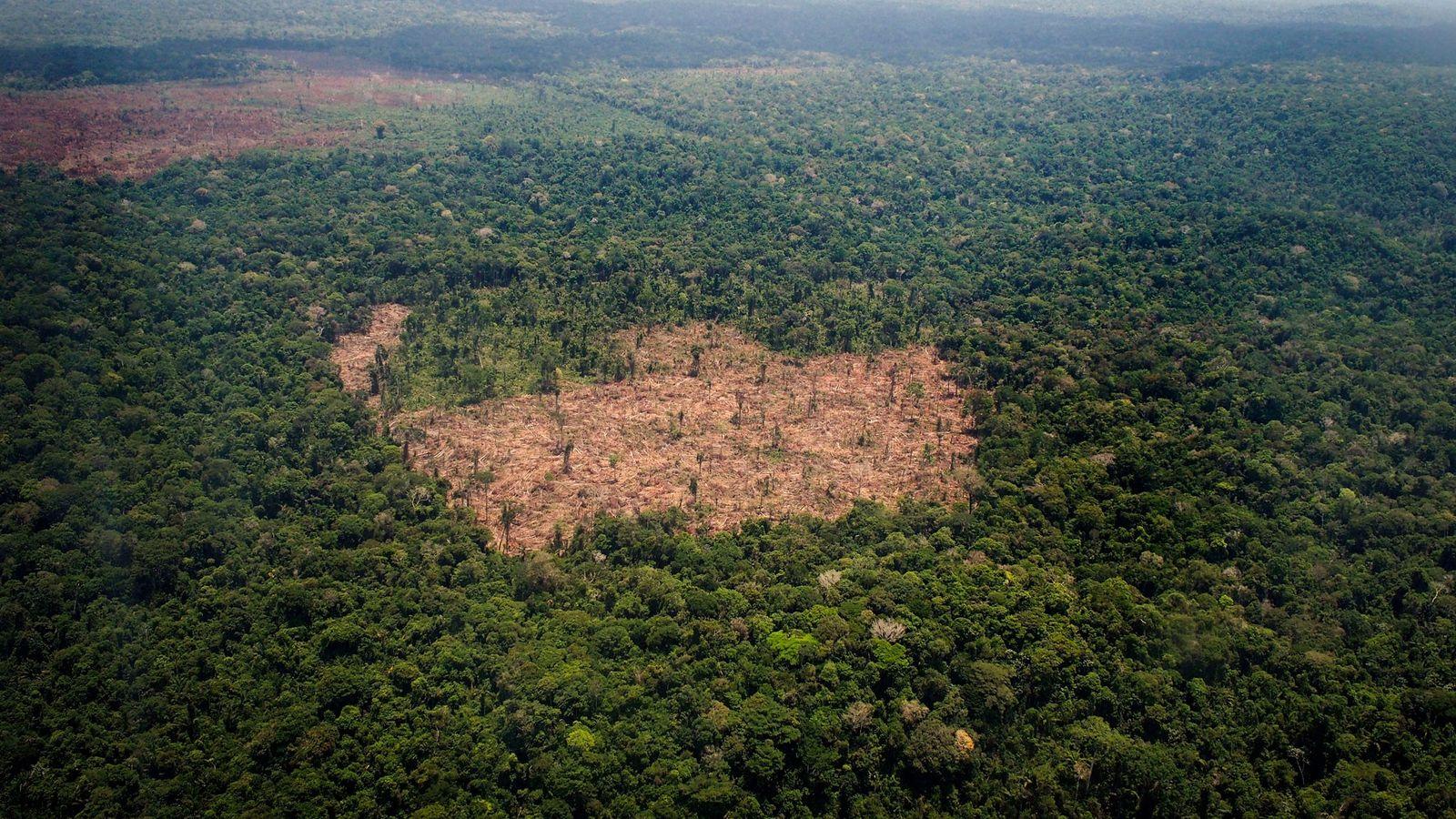 Um pedaço de terra desmatada divide a Floresta Amazônica, no Brasil, o país mais mortal para ...