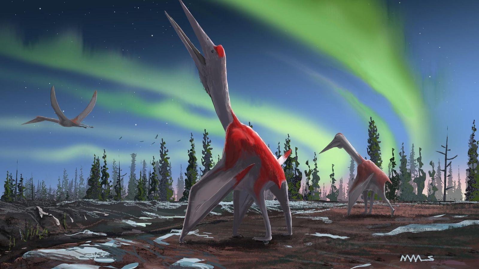 """Estudo publicado no Journal of Vertebrate Paleontology descreve um novo pterossauro chamado Cryodrakon boreas, """"dragão de ..."""