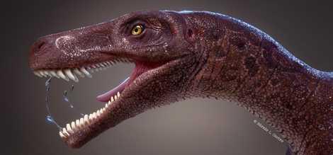 Dinossauro carnívoro brasileiro revelado por meio de fóssil extraordinário