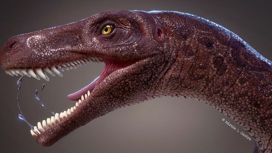 O Gnathovorax cabreirai, nesta ilustração, era o dinossauro carnívoro mais antigo de seu tipo no Brasil ...