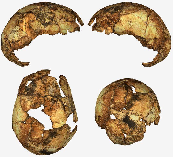 Fragmentos de crânio de um indivíduo Homo erectus foram descobertos na África do Sul — a ...