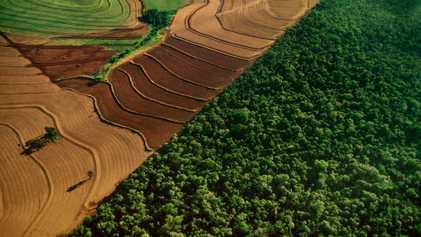 Bolsonaro prometeu explorar os recursos da Amazônia – mas ele pode fazer isso?