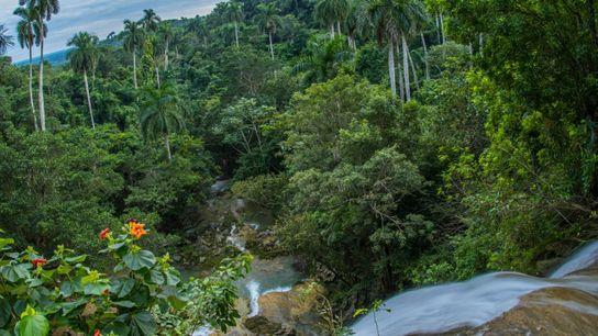 Cachoeira deságua em uma floresta de palmeiras-reais-de-cuba criticamente ameaçadas de extinção em Soroa, Artemisa, Cuba.