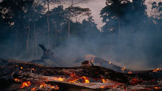 Diminuição da Amazônia pode afetar clima e abastecimento de água em todo o planeta
