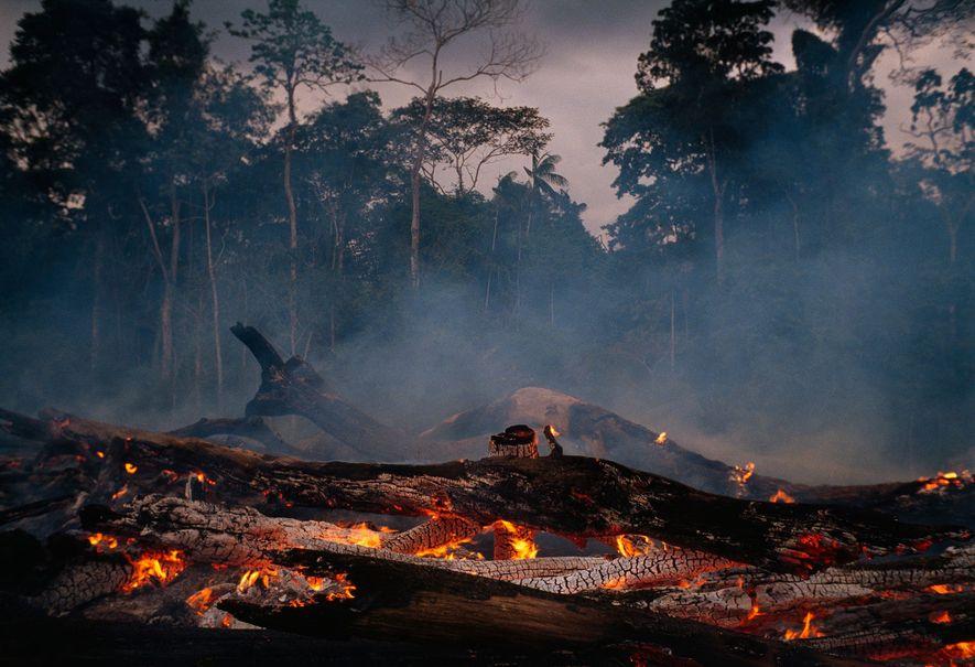 A taxa de desmatamento da Amazônia brasileira aumentou nos últimos anos – e sob a liderança ...