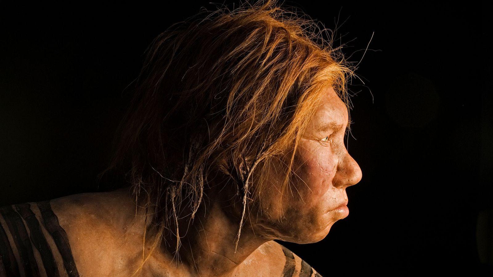 Descoberta em 2008, esta reconstrução de uma mulher neandertal foi a primeira feita utilizando evidência de ...